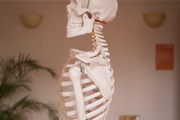 skeleton dummy with good body alignment